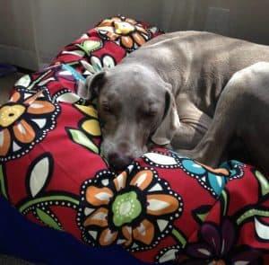 Dog Supplies: The Snugatti dog bed by Dog Crazy Designs   Handmade in Alaska   Made in USA