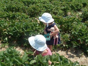 Agritourism, Pick Your Own Berry Farms, support local agriculture!