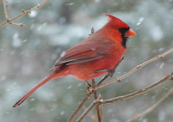 For the Birds: Feeding Wild Birds All Winter Long With Made in the USA Products