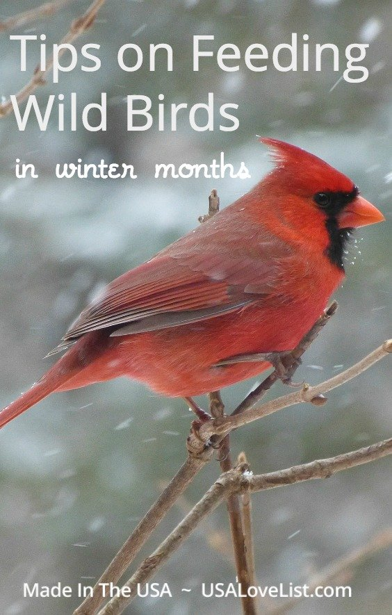 Feeding wild birds in winter : tips and American made bird feeder product selections