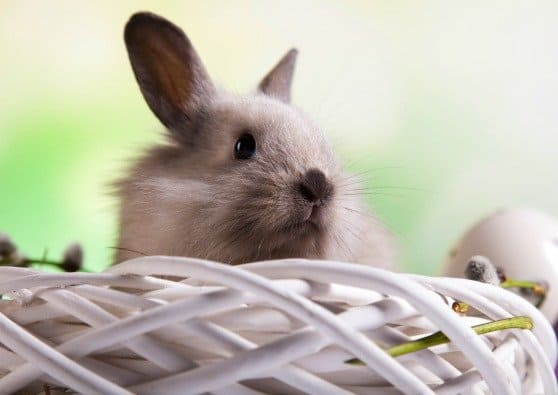 Easter Bunny's Shopping List: American Made Easter Basket Ideas for Kids