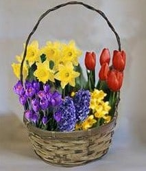 Wisconsin Growers Greenhouse gift baskets
