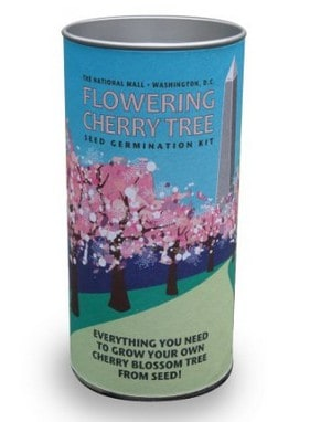 Cherry tree germination kit