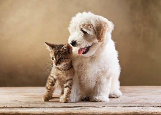 10 Things We Love for Pets, Made in the USA