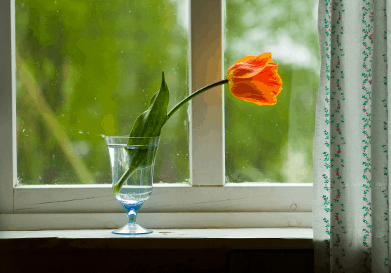 spring-organizing
