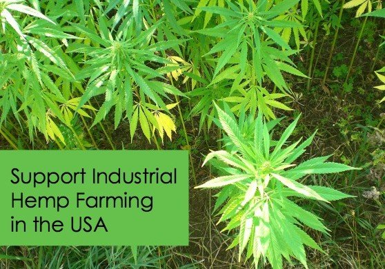 Industrial hemp farming in the USA
