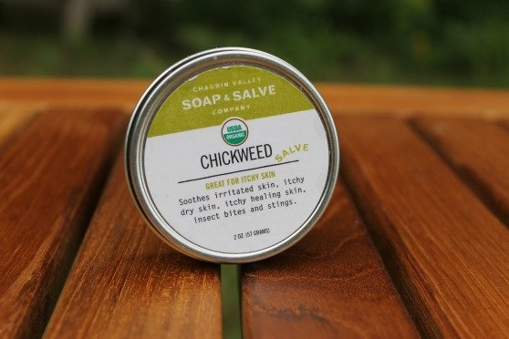 Chickweed salve | Natural remedies for summer ailments | Soothes itchy bug bites
