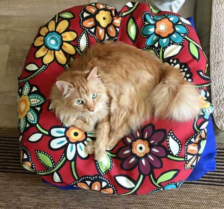 The Snugatti by Dog Crazy bedding | Cats love it too! | Cat supplies we love