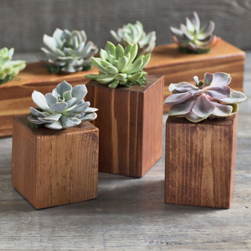 Home Decor Gifts: Cedar Succulent Holders from Vivaterra