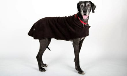 Made in USA Dog Coats: Introducing MountainMuttDogCoats Boulder®