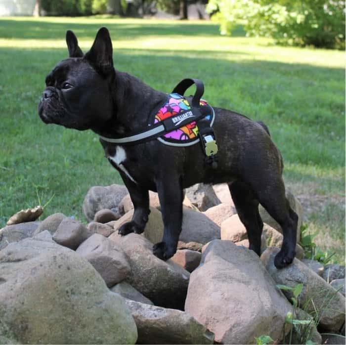 Made in USA Dog Supplies: Brilliantk9 harnesses for dogs of all sizes Save 15% on your BrilliantK9 harness order with promo code USALOVE. Minimum Order $25.00. No Expiration.  #usalovelisted #dogs #pets #dogsupplies #harnesses #petsupplies