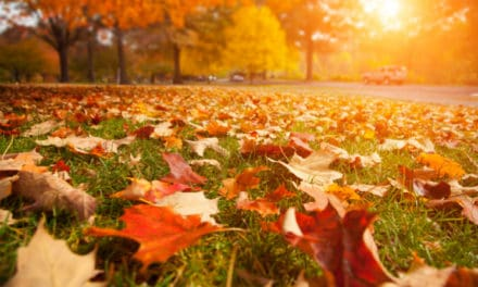 4 Fall Landscaping Projects (With American Made Supplies)