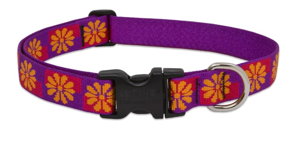 American Made Cat Collars from Lupine Pet