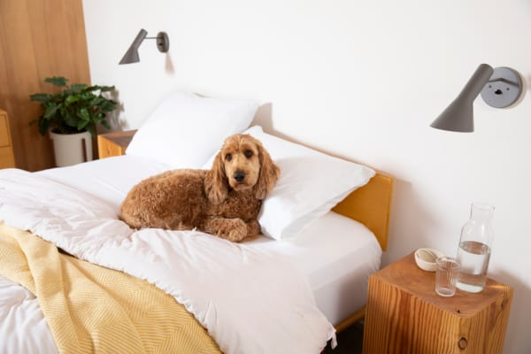 Made in USA comforters: Authenticity50 wool comforters.