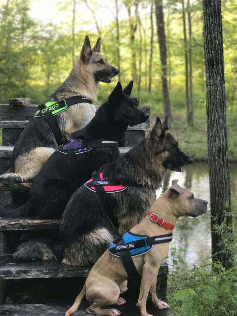 American Made Pet Products featuring BrilliantK9 harnesses Save 15% on yourBrilliantK9 harness orderwith promo code USALOVE.Minimum Order $25.00.No Expiration.