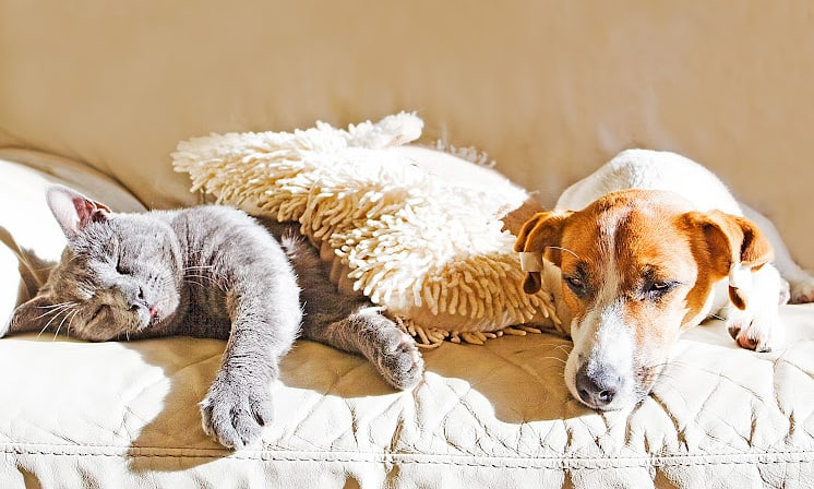 American Made Pet Products: Ultimate List of Sources